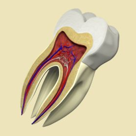 Zdrowa miazga zęba nie wymaga leczenia kanałowego.